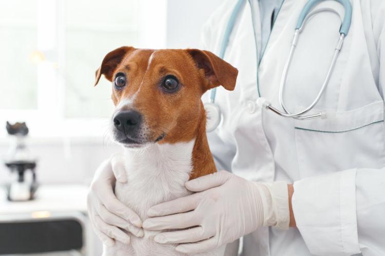 犬の嘔吐薬、動物病院での検査は必要?