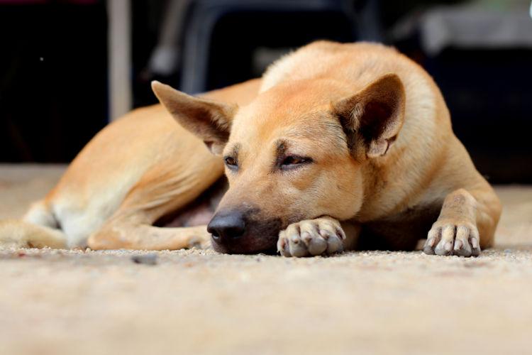 【獣医師監修】犬の下痢はどうやって治療するの?人間用の市販薬(下痢止め)を飲ませても大丈夫?