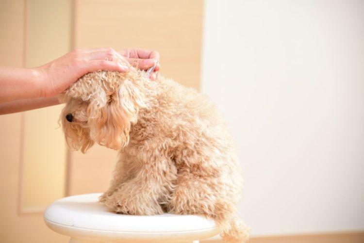 【獣医師監修】犬のフィラリア予防薬、いつからいつまで必要?期間や種類、値段、副作用は?