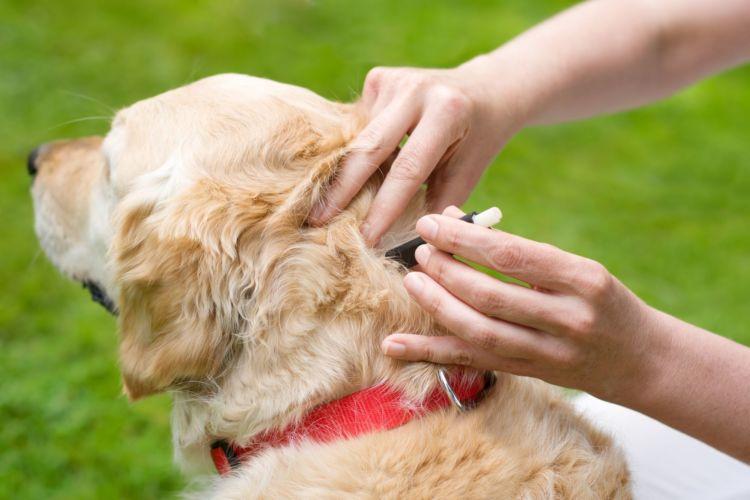 犬のノミ・ダニ予防薬【与え方や飲ませ方は?】