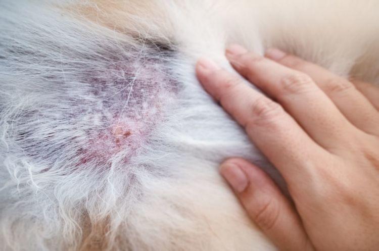 犬のアレルギー治療①【原因の除去】