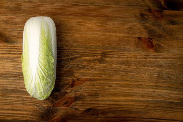 犬が白菜を食べても大丈夫!
