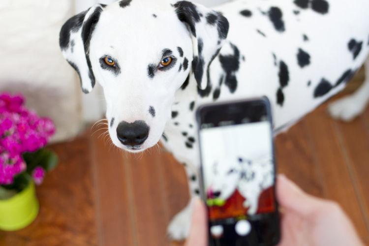 動物病院に犬の今の状態を伝える