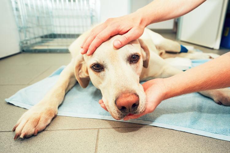 応急処置は獣医師の指示に従う