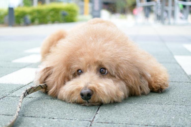 犬の【栄養失調】の症状は?