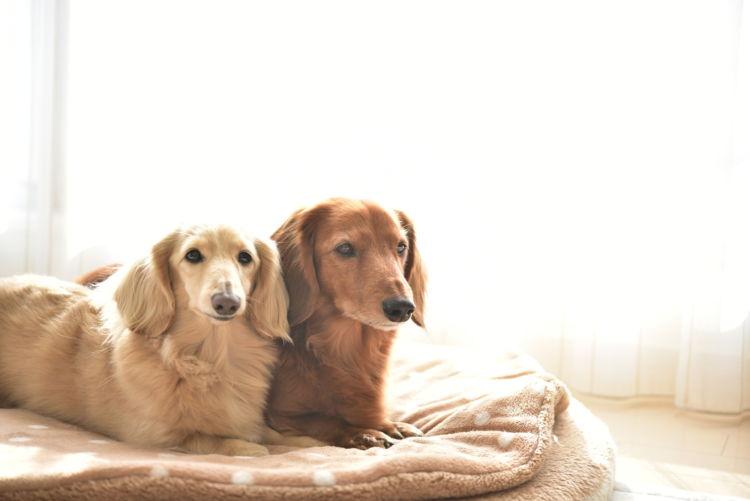 【栄養失調】になりやすい犬種