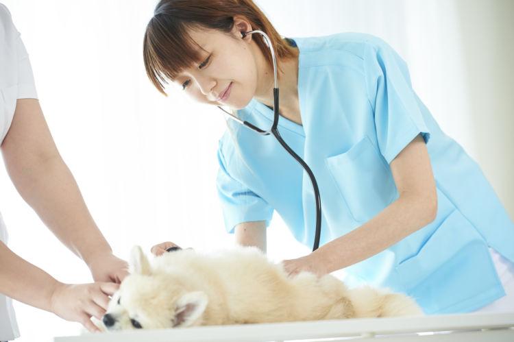 犬の【栄養失調】の治療方法・解決方法!