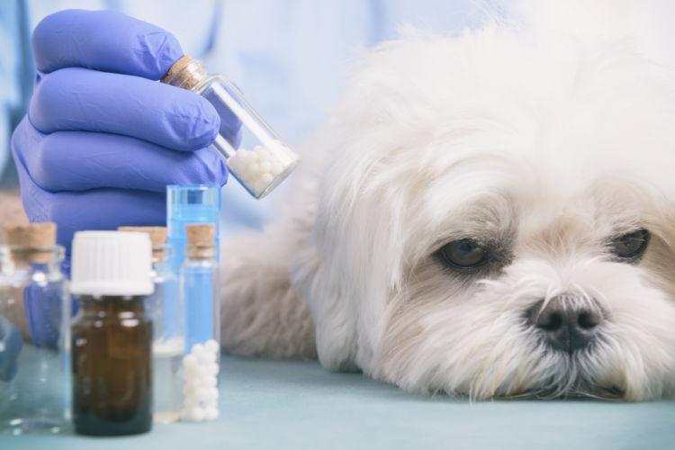 【獣医師監修】犬の栄養剤の種類や与え方は?犬に栄養剤(ドリンク)を与えても大丈夫?
