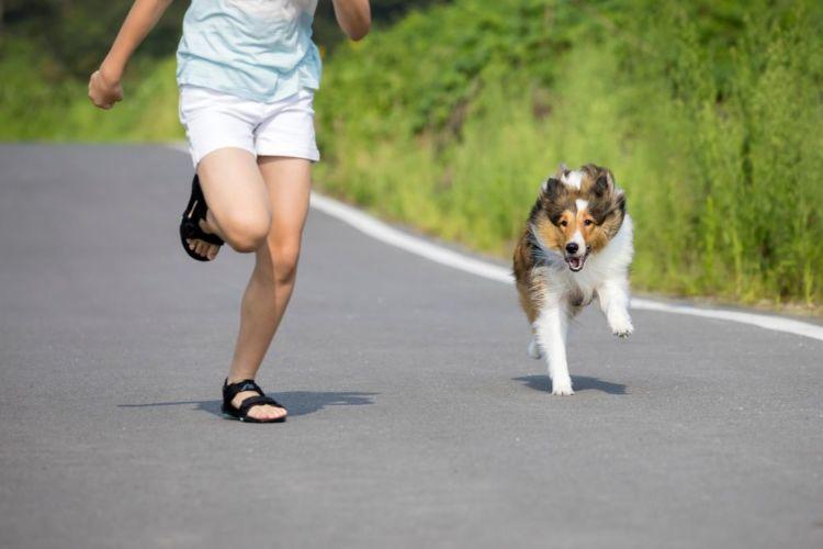 犬 軽い運動 エネルギー消費