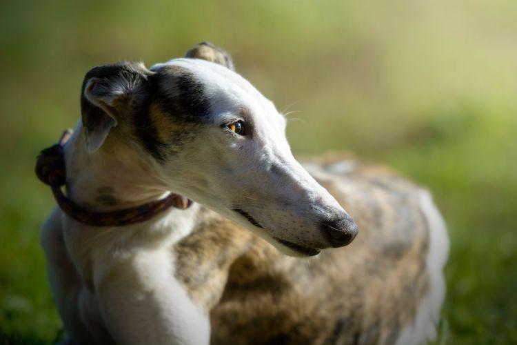犬の栄養失調の原因③【消化・吸収機能の低下】