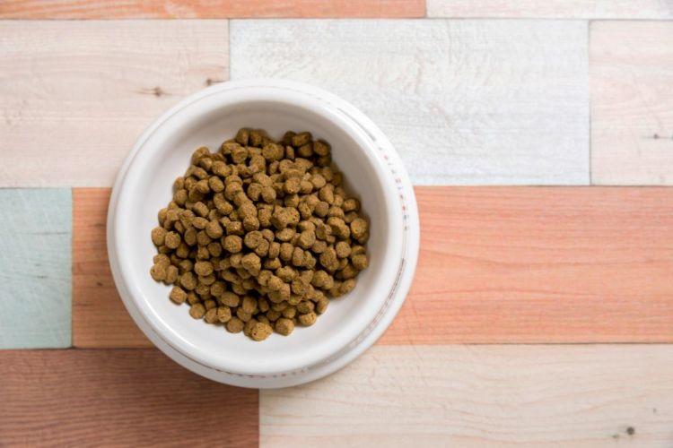 犬の栄養失調の原因⑤【ジェネリックフード症候群】