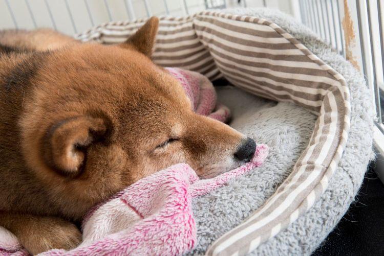 犬の【栄養失調】と間違えやすい病気は?