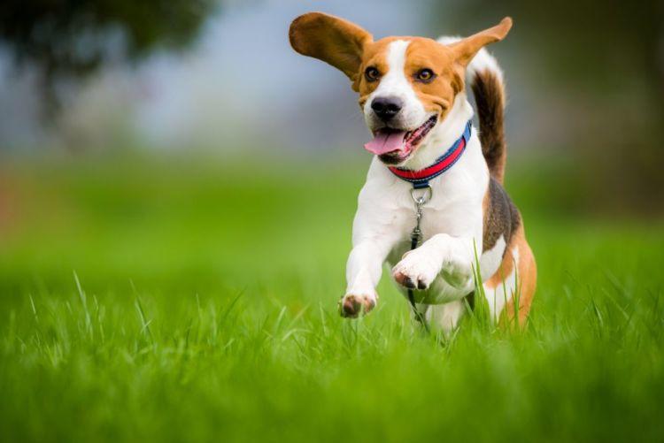 【獣医師監修】愛犬の代謝(基礎代謝)を上げるには?代謝が関係する病気も知っておこう!