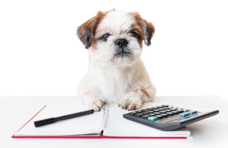 【獣医師監修】犬の栄養食「総合栄養食」とは?老犬や子犬などライフステージ別、手作り食での注意点!