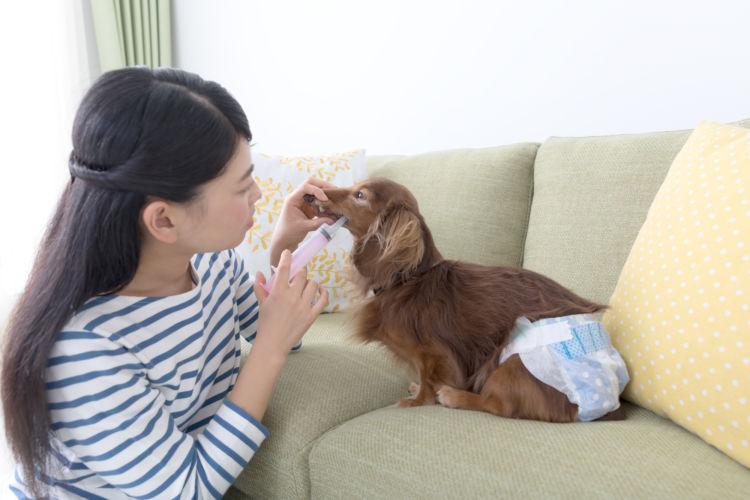 老犬 栄養補給 流動食 注射器
