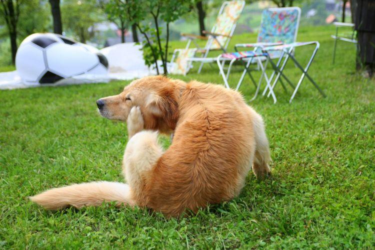 犬の口の周りが腫れる「原因」④【アレルギー】