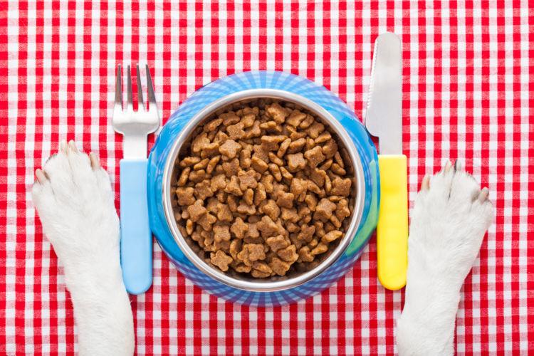 【獣医師監修】犬の栄養について知っておこう!犬も三大栄養素は必要?手作り食での注意点は?