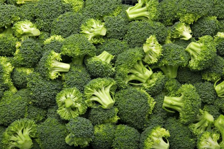 ブロッコリーを与える際の注意点③【食べすぎに注意!】