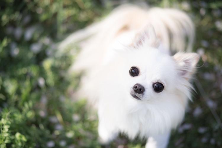 犬の「ボタン」の誤飲、まずすべきことは?