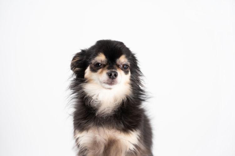 犬の「布」の誤飲、症状は?