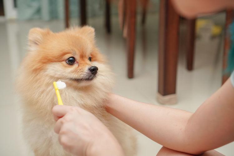 犬 歯磨き 歯 変色