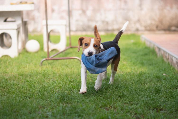 犬の「布」の誤飲、誤飲しやすい布製品