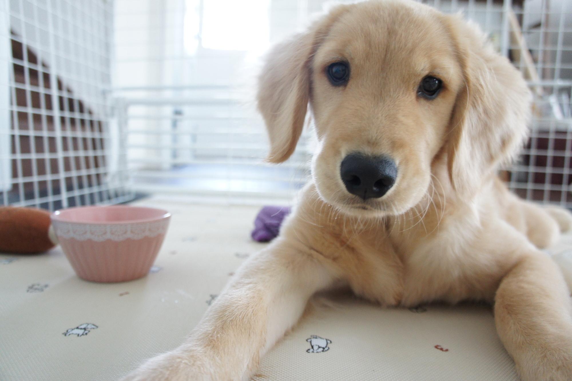 犬の「布」の誤飲、注意点・予防対策!