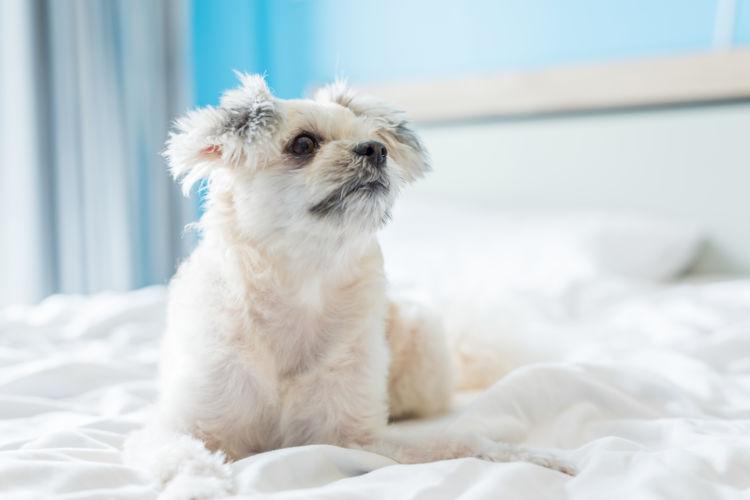 犬の「ビニール」の誤飲、対処方法は?