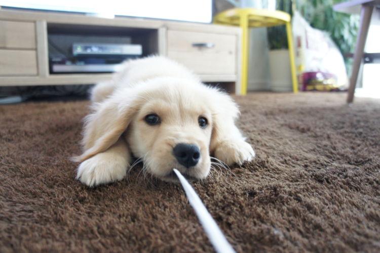 犬の「ビニール」の誤飲、誤飲しやすいビニール製品