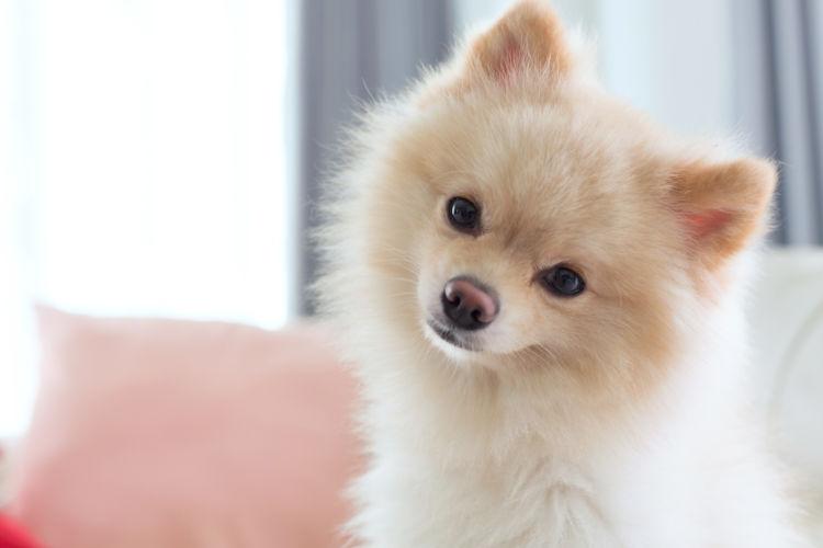 犬が【生】の水菜を食べても大丈夫?