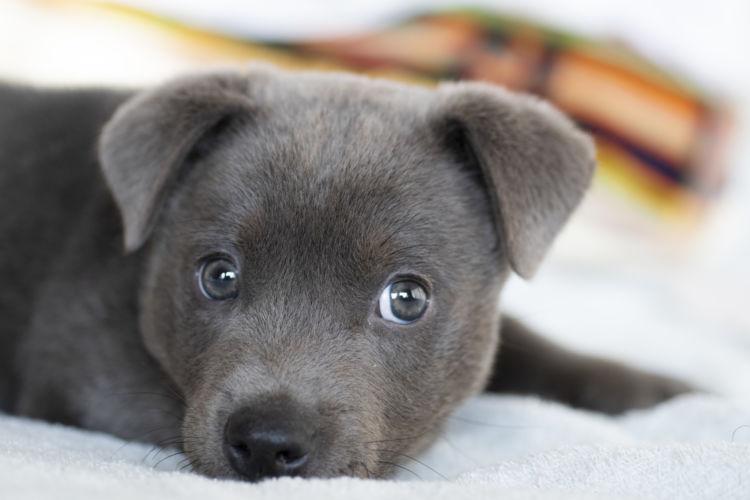 【子犬・老犬】が水菜を食べても大丈夫?