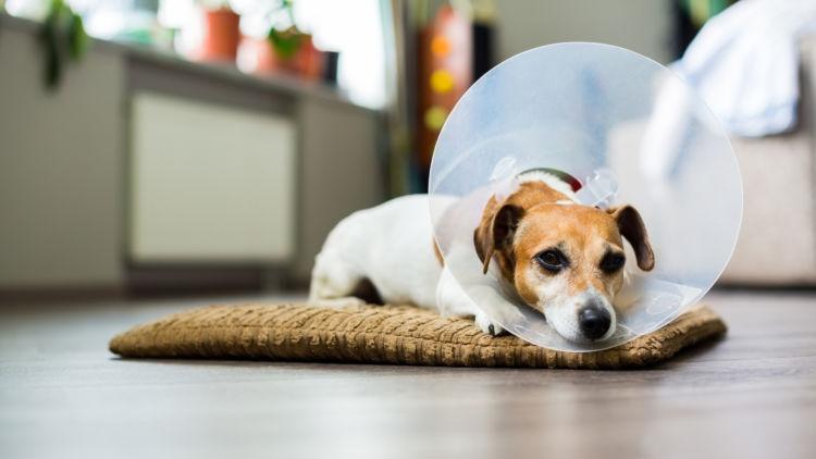 犬の口の出血「原因」⑥【顎の骨折】