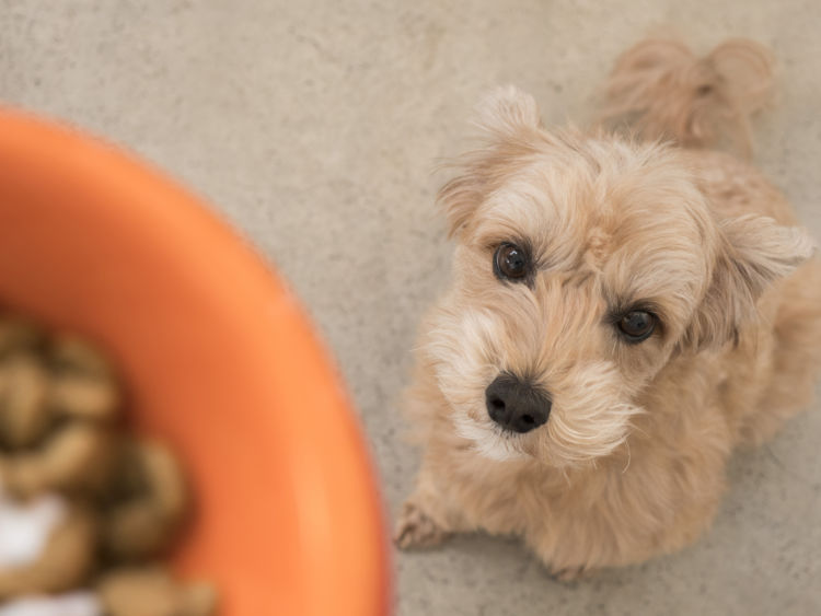 【老犬や子犬】の貧血に良い食べ物(食事)は?