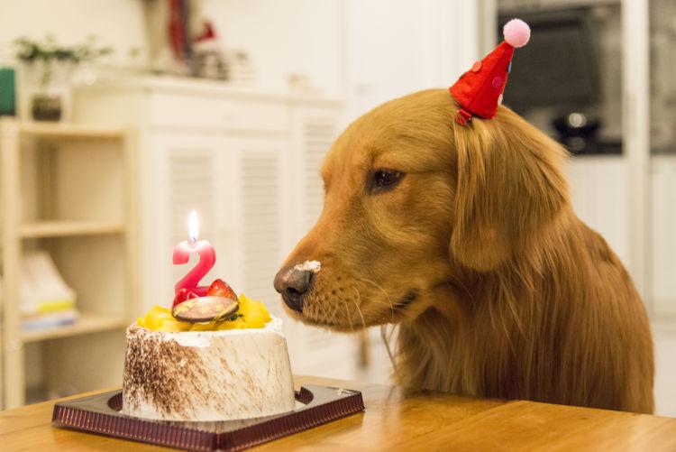 【獣医師監修】犬が生クリームを食べても大丈夫?適量は?乳糖不耐症(下痢)やアレルギーに注意!