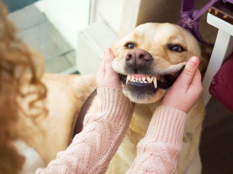 犬の歯周炎「予防対策」①【日常的に口の中をチェックする】