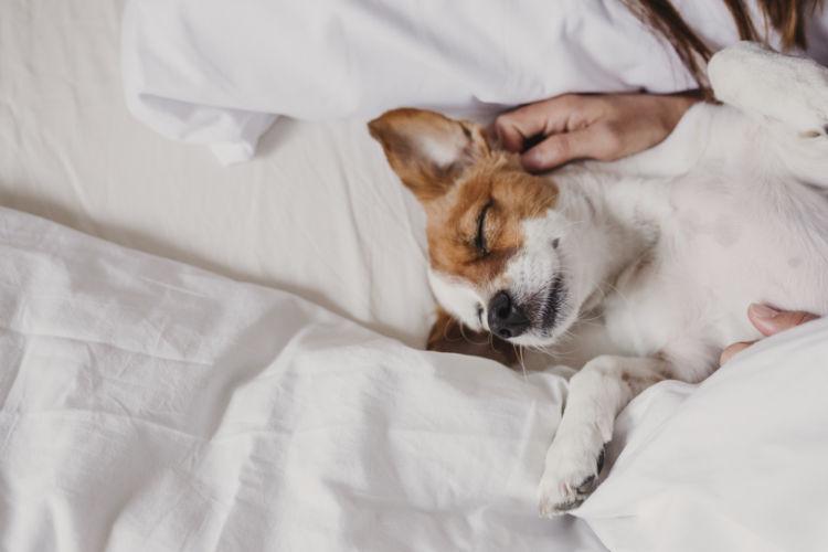 犬の口の中が紫(青紫)に変色「原因」①【低酸素(呼吸器系障害)】