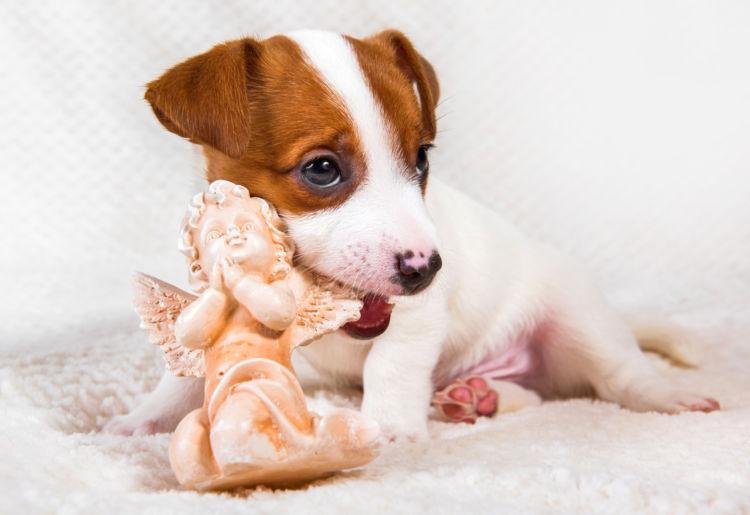 犬の内歯瘻(ないしろう)【まとめ】