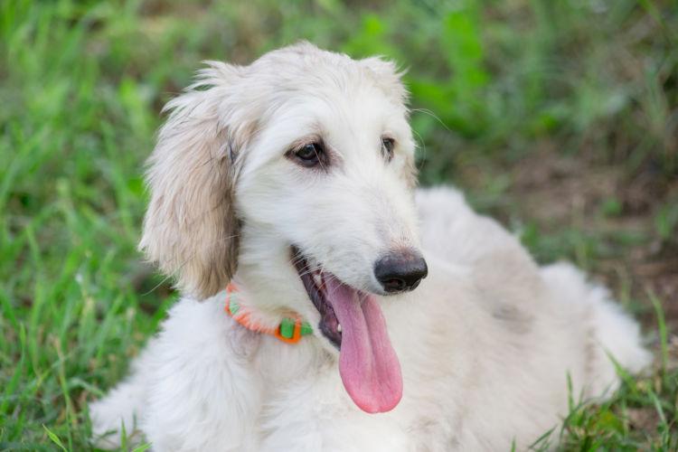 犬の甲状腺機能低下症【まとめ】