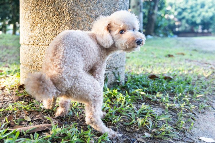 【獣医師監修】犬も便秘になる?子犬から老犬まで、愛犬の便秘の改善・解消に役立つ食べ物(食材)は?