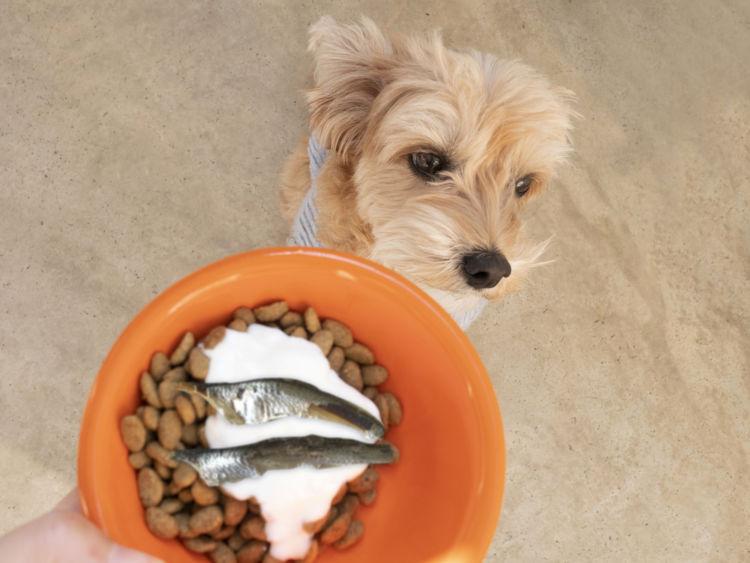 犬 ヨーグルト 食事 トッピング