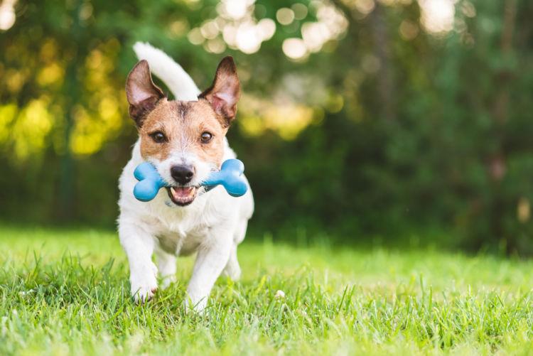 犬の口腔鼻腔瘻【食事】