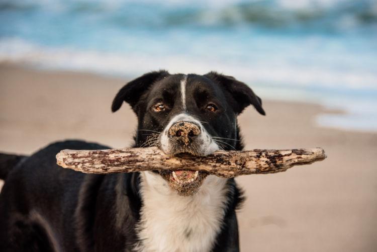 犬の内歯瘻の原因【破折・咬耗の場合】