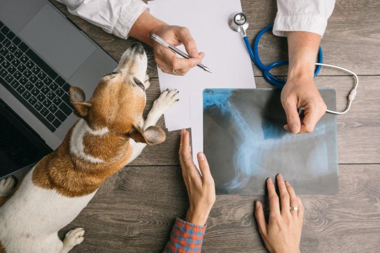 【獣医師監修】犬で注意すべき結石は?結石ができやすい食べ物や結石の予防法、治療方法は?