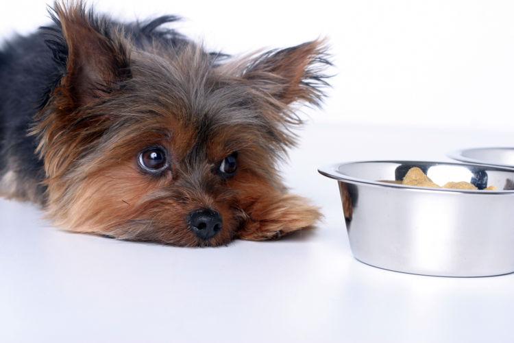 犬に結石ができやすい食べ物は?