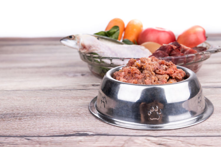 犬にタンパク質は必要?