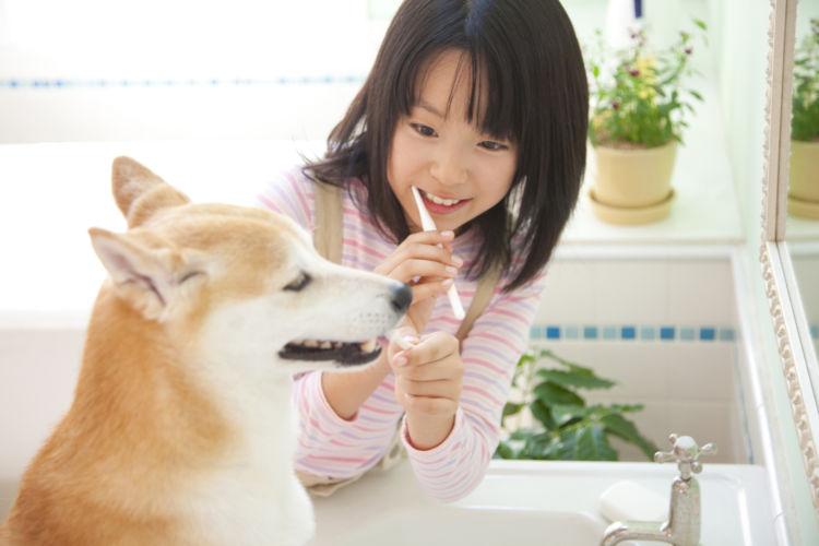 柴犬の歯磨き①【歯磨きの仕方】