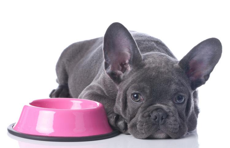 【獣医師監修】犬の療法食とは?種類は?子犬から老犬まで、必要な場合と与える際の注意点を解説!