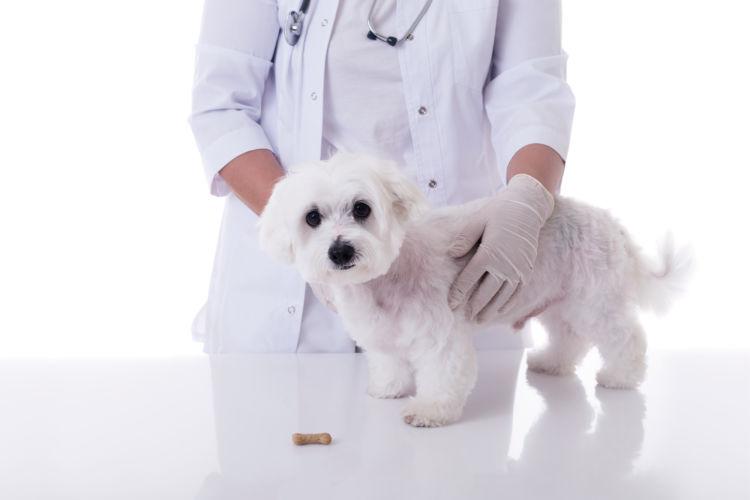 犬の療法食とは?