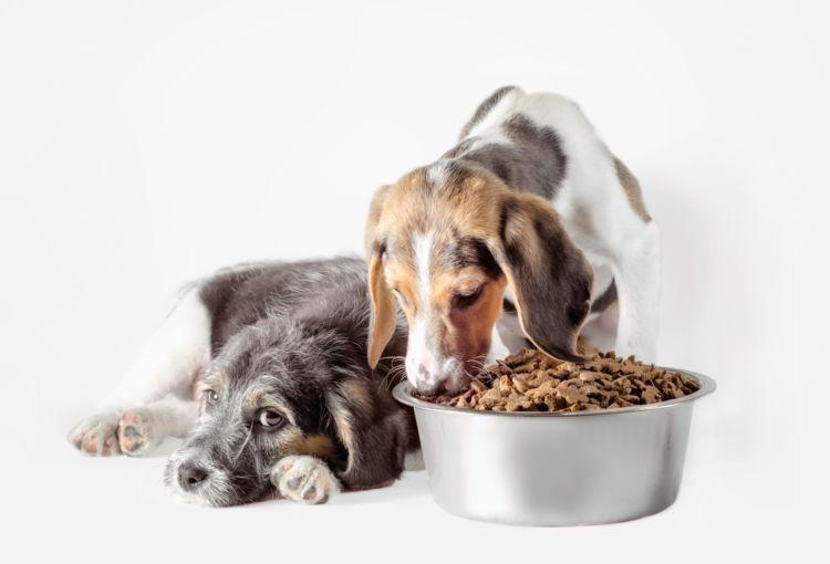 犬の療法食、おすすめは(子犬・成犬・老犬)?
