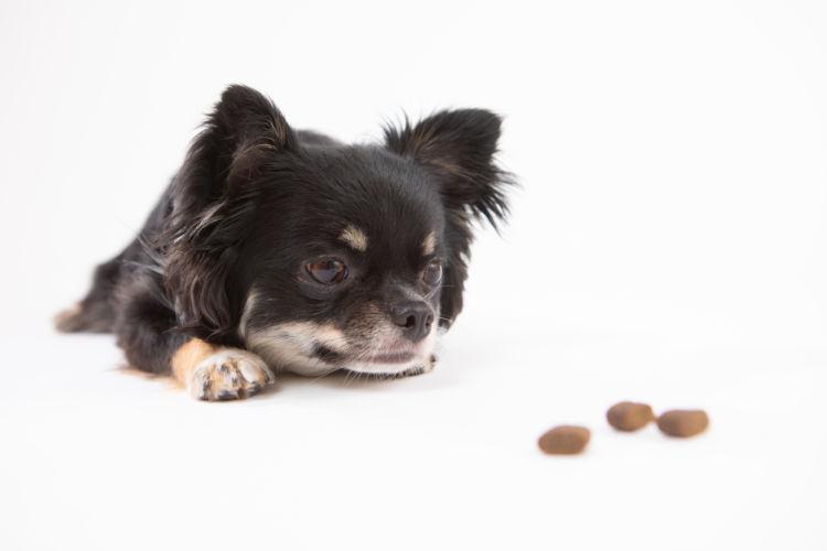 犬 療法食 種類